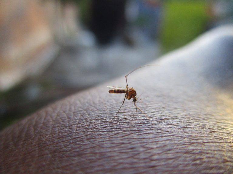 Optez pour un piège à moustique extérieur efficace